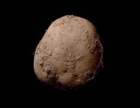 abosch potato