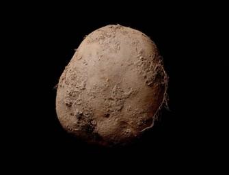 1 miljoen voor foto van een aardappel